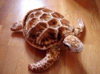 grosse tortue 8e
