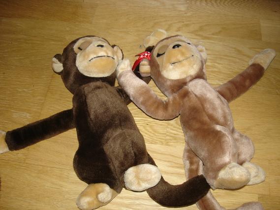 couple de singe 5e les 2
