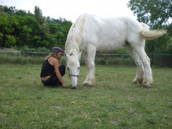 Concours Photo Juillet : Quand Cheval rime avec Poésie... Trotte-traits-boulonnais-naka-img