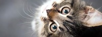13501702_1121646011211918_4448719762302188457_n-jpg__nc_cat=105&_nc_ohc=hzT-TypFllwAX_75m3r&_nc_ht=s