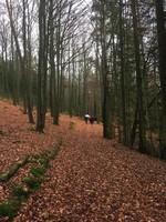 Une autre forêt superbe