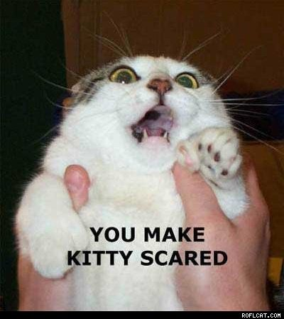 scared_kitty