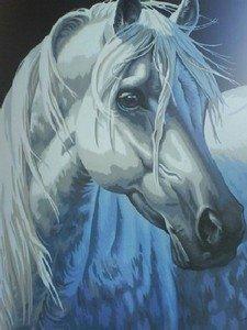 Etalon - mon animal préféré - peinture par numéro