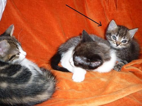Pin's bébé parmi ses frères et soeurs
