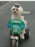 chien police bike
