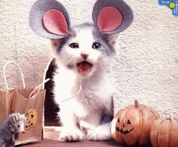 chat-souris-haloween