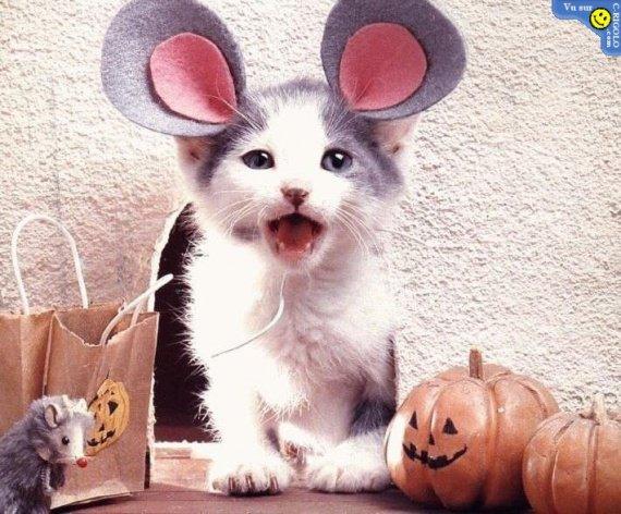 chat-souris-haloween