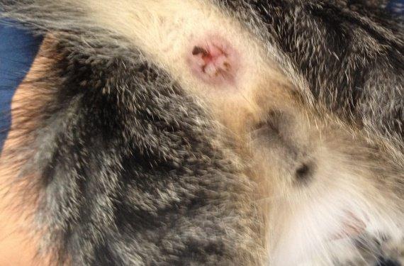 Le traitement contre les parasites dans lorganisme de la personne les rappels