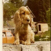 Pixie 1979