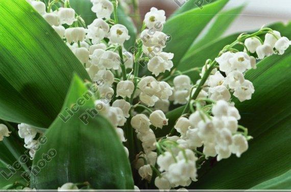 Fleurs-Flowers11