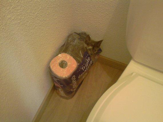 Fanta et les wc