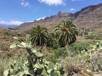 une plantation d'alovera