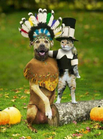 Deguisement d halloween pour chat et chien deguizzz 39 dog zizirator05 photos club doctissimo - Deguisement halloween chien ...
