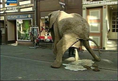 sacre-nanimo-elephant-caca-pipi_1e8fd3-img