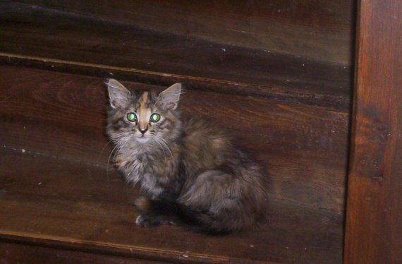 chaton sauvage 005