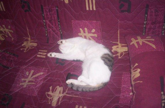 chaton sauvage 017
