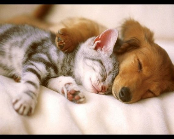 amis chats chiens