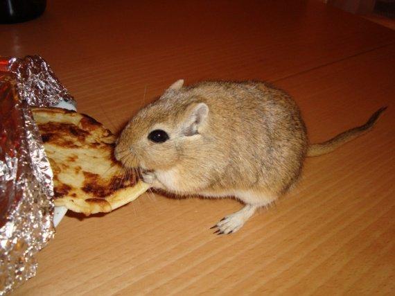 Buffalo : Miam les Pancakes