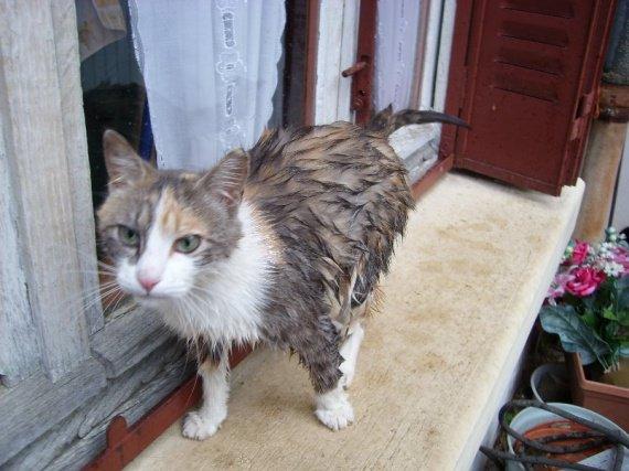 Chat mouillé et pas content !