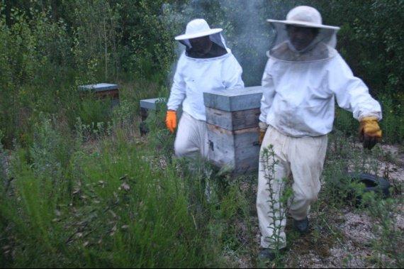 apiculteur1