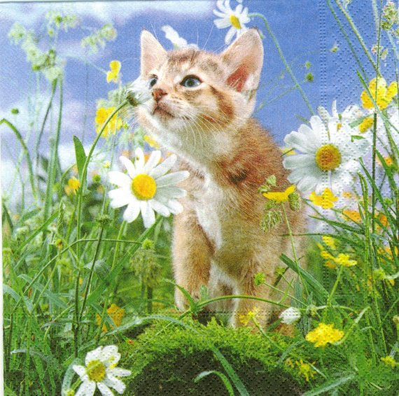 le chat de marguerite chats-collect-perso-chaton-marguerite-img