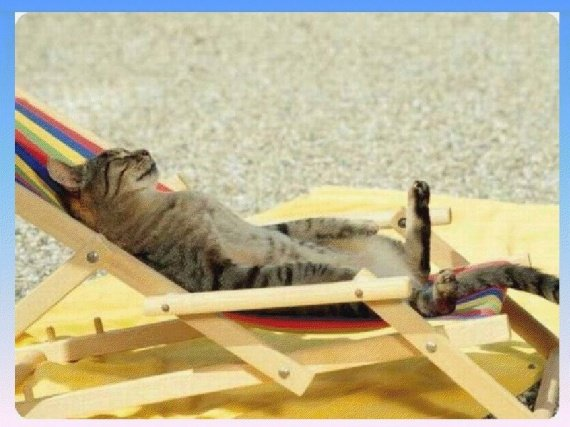 animaux-chat-relax-img
