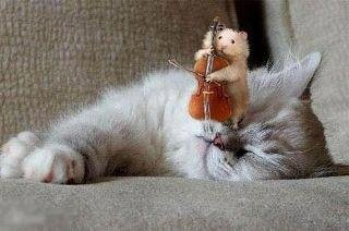animaux-chat-surprise-img
