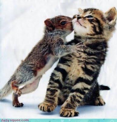gifs-ecureuil-bisou-chaton-img
