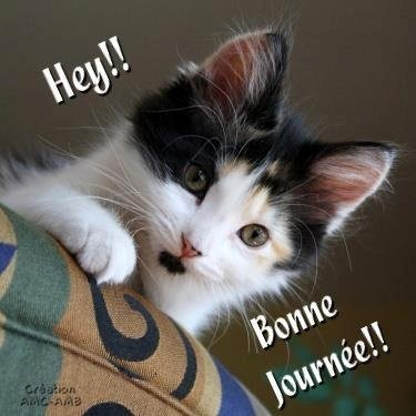 Topic des chats - Page 8 Img-201296835d0