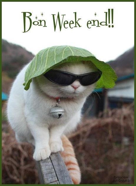 """Résultat de recherche d'images pour """"bon week end chats"""""""