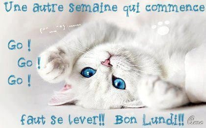 petits-chats-bonjour-lundi-img-img