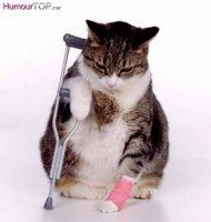 Chat_handicape_humour