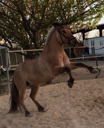 petit cheval courageux