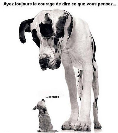 courage-pensee-humour-chien