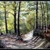 Vaux de Cernay  forêt de Rambouillet