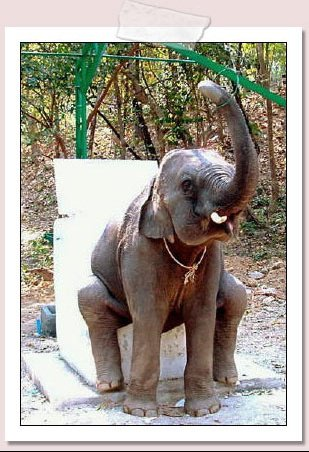 elephanttoilettes