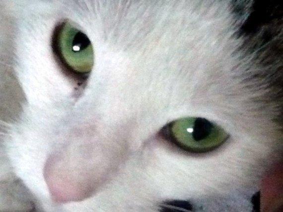 dans le vert de tes yeux ...