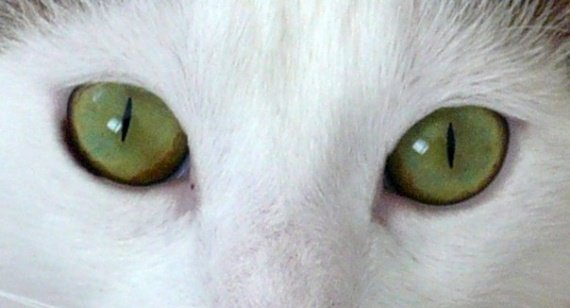 yeux.1