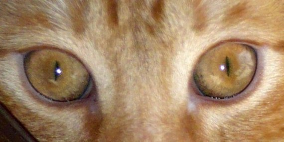 yeux.2
