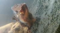 Couche gélatineuse aquarium