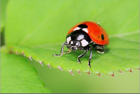 coccinelle_gt
