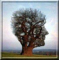 arbre_connaissance