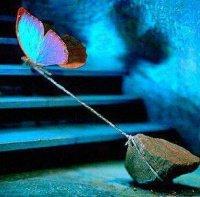papillon_pierre