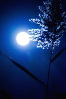 lune_bleue
