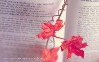 feuilles_livre