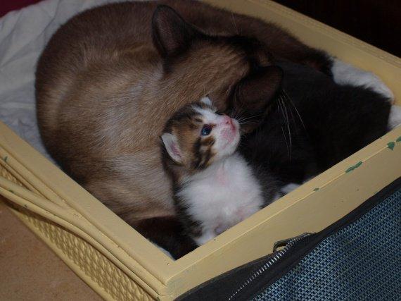 Tesshu avec sa maman