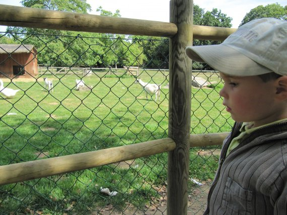 zoo bourbansais 11 juillet 2011 001