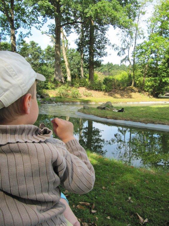 zoo bourbansais 11 juillet 2011 011