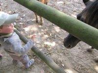 zoo bourbansais 11 juillet 2011 013