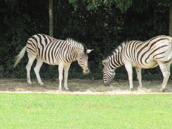 zoo bourbansais 11 juillet 2011 035